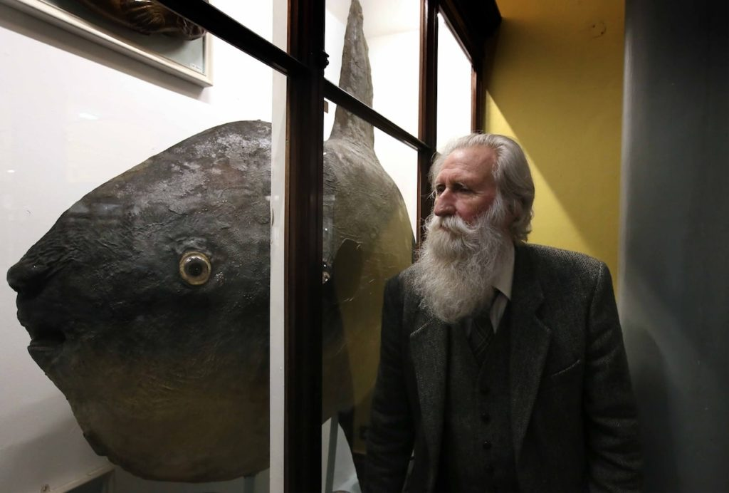 Naturalist Adrian Shine at the Natural Museum of Ireland looking at one of the exhibitions.