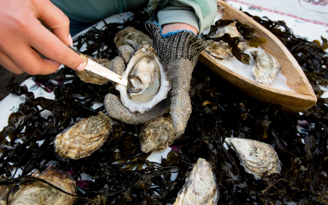 Sligo Oyster Experience now Offering Farm Tours
