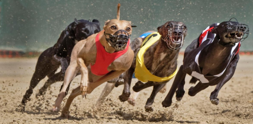 Five of the Best Greyhound Racing Venues in Ireland